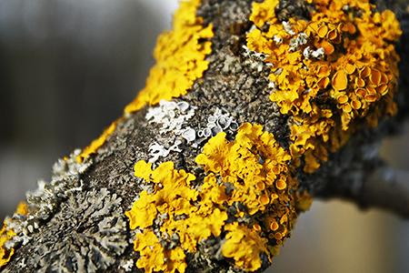 Florilegio di Licheni